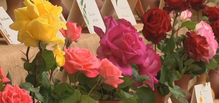 Exposició de Roses, l'any passat