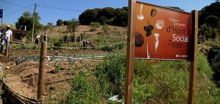 Terrenys on s'ubiquen els Horts Socials