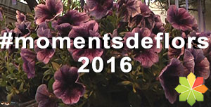 Moments de Flors 2016