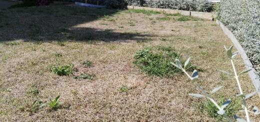 La gespa de la plaça Dolors Pujol acusa la sequera