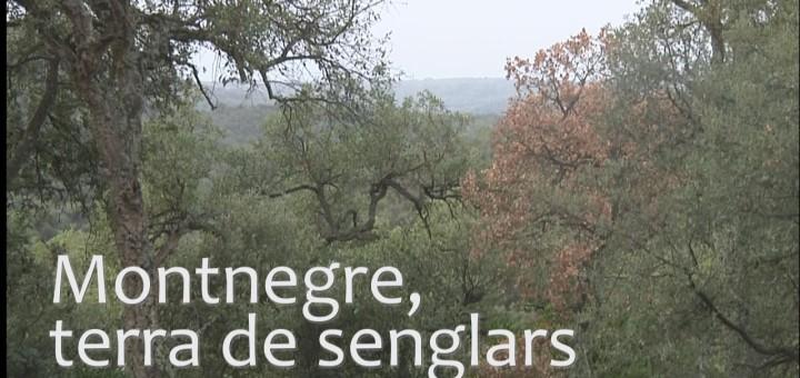 Montnegre, terra de senglars
