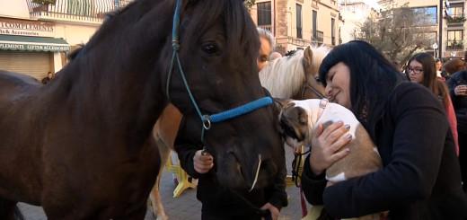 Festa de Sant Antoni Abat a Calella, arxiu