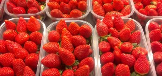 Fresas-de-febrero-620x250