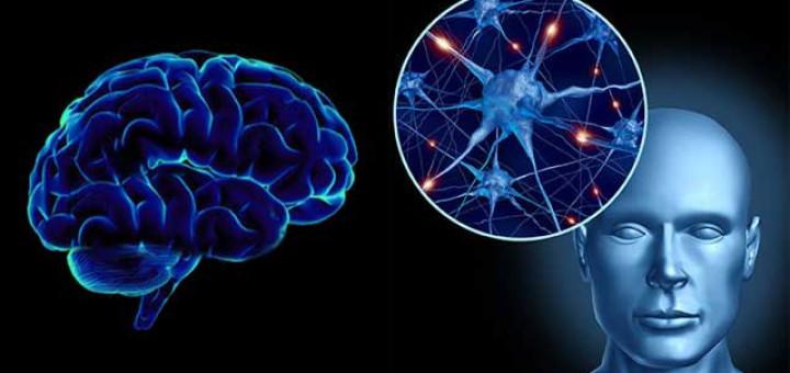 Parkinson-inflamacion-cerebro