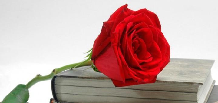 llibre-rosa