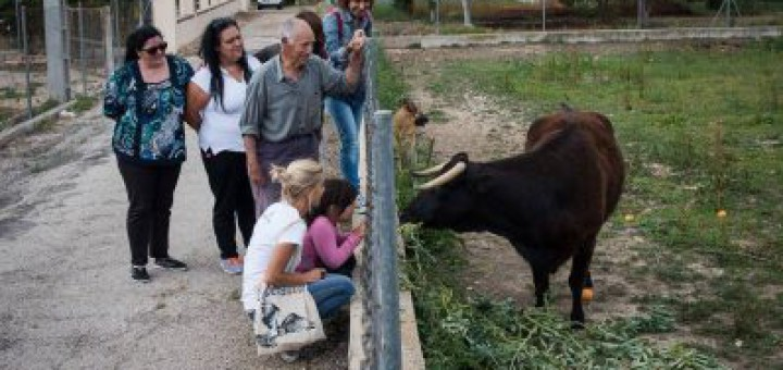 Font: PACMA, Partit Animalista