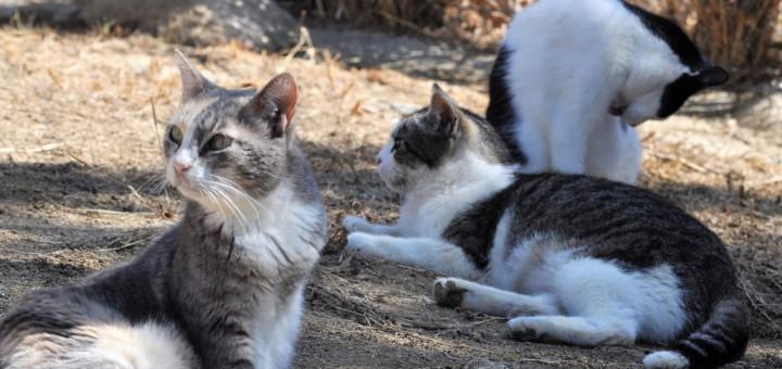 Foto: Animals del Maresme