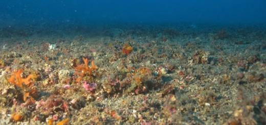 fons-mari