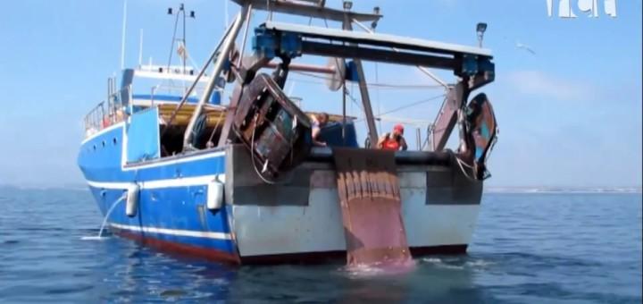 """[Vídeo][La Ciutat] Ramon Tarridas : """"El lluç s'està pescant al Maresme 11 vegades per sobre de les seves possibilitats de reproducció"""""""