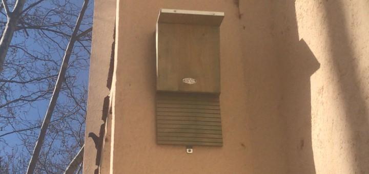 Una de les caixes-niu per a ratpenats instal·lada al Pavelló