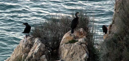 corbs_marins2