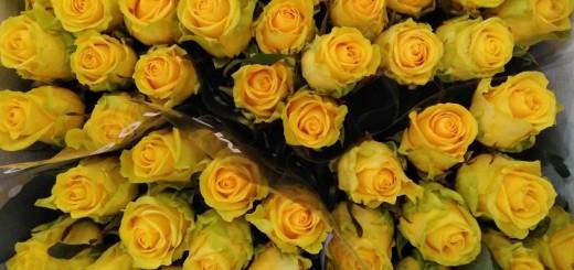 roses-grogues-190418-1024x576