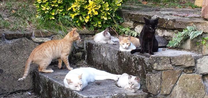 Un grup de voluntaris s'encarrega de controlar la colònia de gats de carrer a Valldenguli