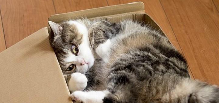 gato-maru (1)