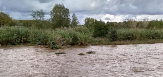 Imatge del riu Tordera del passat 15 d'octubre (FOTO: Anna Llopart Gumbau)