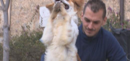 desfilada canina 3