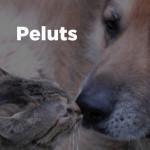 peluts_quadre