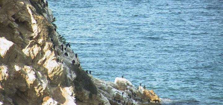 corb marí web