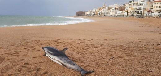 dofí mort 2