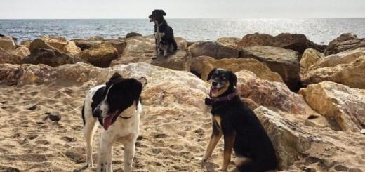 els-gossos-tambe-volen-anar-a-la-platja-1