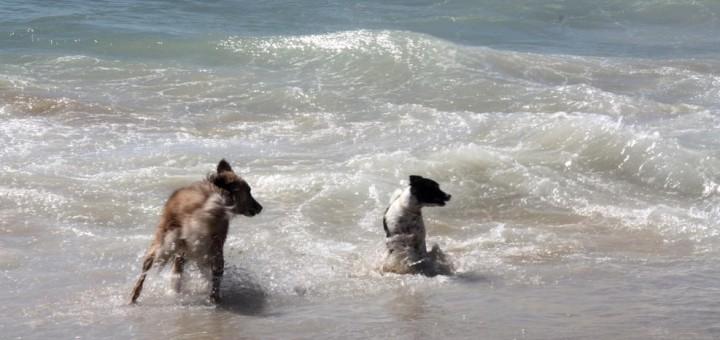 platja de gossos